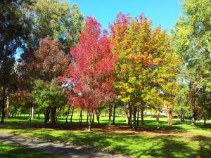 Autumn in John Knight (Belconnen - Canberra)