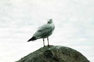 Seagull Lake Ginninderra